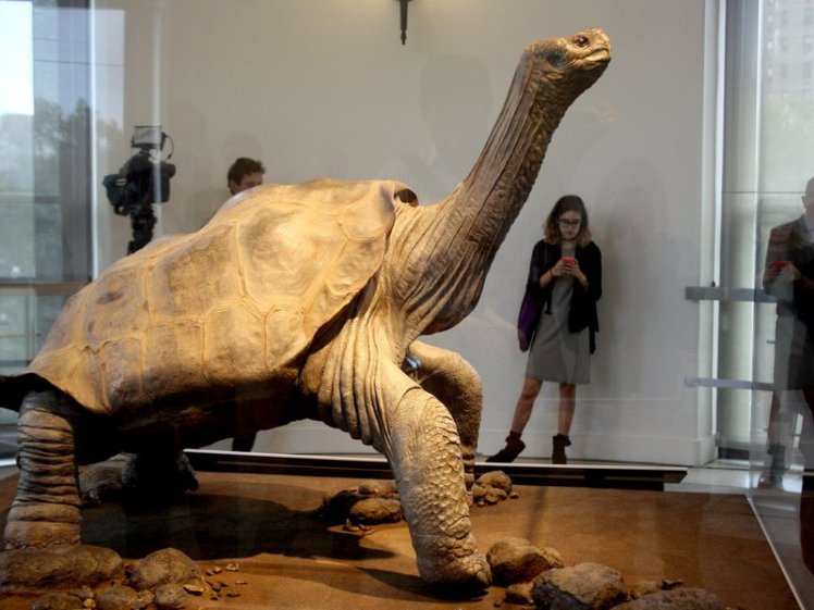 lonesome george 4