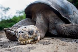 lonesome george2