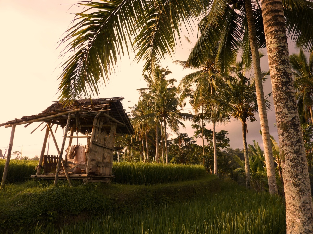 Voices from the rice field... how Bali lost it all