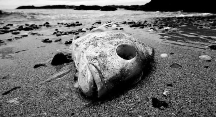 deadocean2